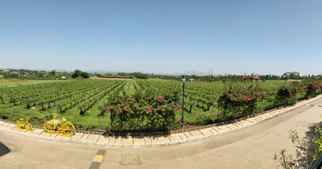 नासिक के पर्यटन स्थल सुला वाइनयार्ड नासिक- Sula Vineyards Nashik In Hindi