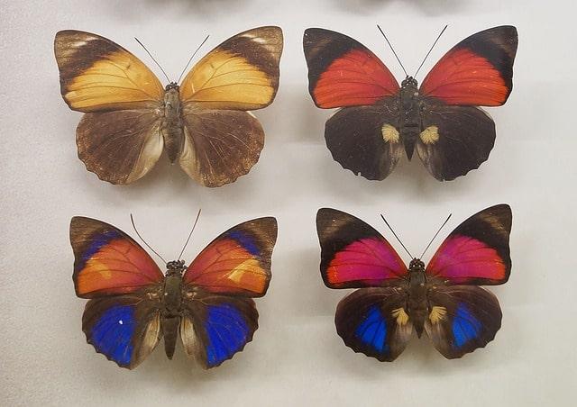 अन्नपूर्णा तितली संग्रहालय पोखरा नेपाल – Annapurna Butterfly Museum In Hindi