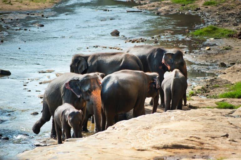 सतपुड़ा राष्ट्रीय उद्यान घूमने पूरी जानकारी - Satpura National Park Pachmarhi Information In Hindi