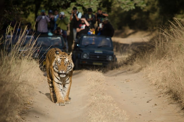 ताडोबा अंधारी टाइगर राष्ट्रीय उद्यान - Tadoba Andhari Tiger National Park Nagpur In Hindi
