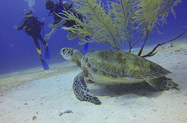 पोर्ट ब्लेयर में स्कूबा डाइविंग - Port Blair Scuba Diving In Hindi