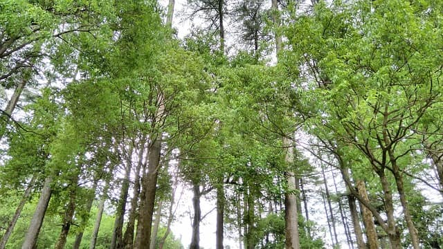धनोल्टी में सबसे ज्यादा देखी जाने वाली जगह इको पार्क- Dhanaulti Me Ghumne Ki Sabse Acchi Jagha Eco Park In Hindi