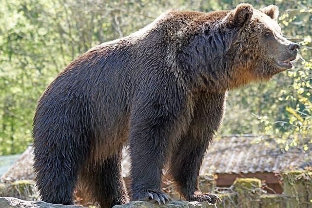 दारोजी भालू अभयारण्य हम्पी - Daroji Bear Sanctuary Hampi In Hindi