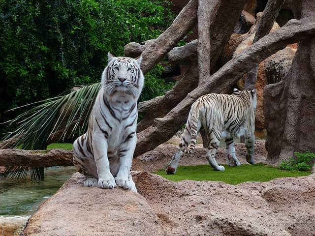 खाज्जिअर में देखने की जगह कलातोप वन्यजीव अभयारण्य - Kalatop Wildlife Sanctuary Khajjiar Me Dekhne Ki Jagha In Hindi