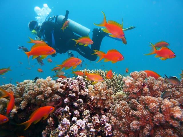 अंडमान व नोकोबार द्वीप समूह में स्कूबा डाइविंग - Andaman And Nicobar Islands Scuba Diving In Hindi