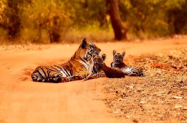 नागझिरा वन्यजीव अभयारण्य - Nagzira Wildlife Sanctuary Nagpur In Hindi