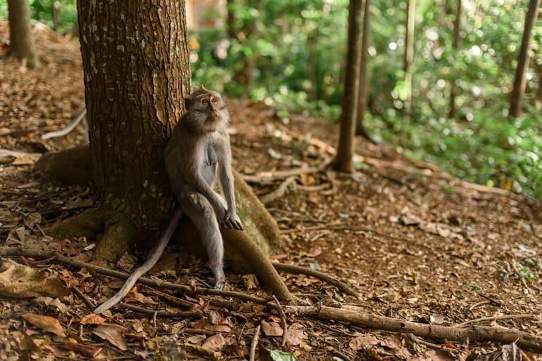 भगवान महावीर वन्यजीव अभ्यारण - Bhagwan Mahavir Wildlife Sanctuary In Hindi