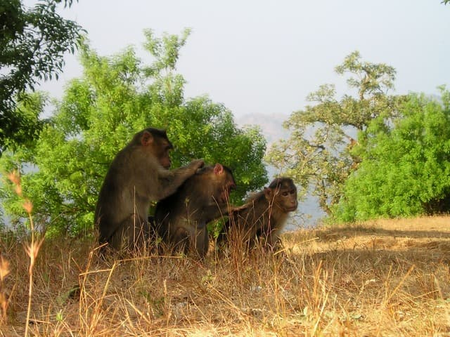 कुद्रेमुख है पश्चिमी घाट का वन्यजीव स्वर्ग - Wildlife Paradise Of Western Ghats Of Kudremukh In Hindi