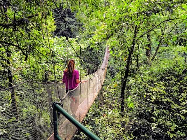 तमन नेगारा मलेशिया में देखने की जगह - Taman Negara Malaysia Mein Dekhne Ki Jagah In Hindi