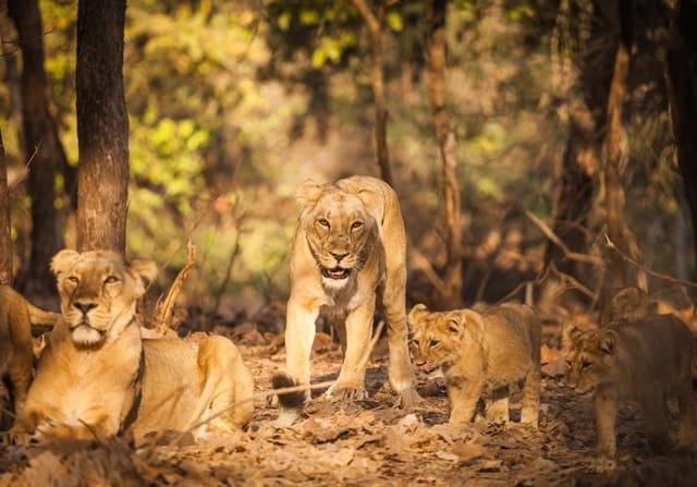 भगवान महावीर वाइल्डलाइफ सैंक्चुरी फ्लोरा एंड फौना - Flora And Fauna Bhagwan Mahavir Wildlife Sanctuary In Hindi