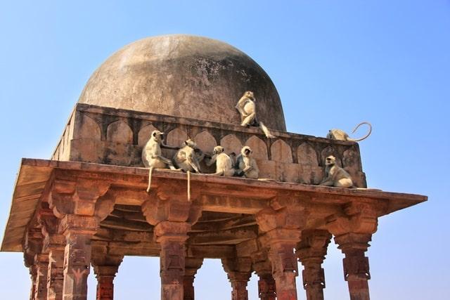 रणथंभौर किले के दर्शन के लिए टिप्स- Tips For Visiting The Ranthambore Fort In Hindi