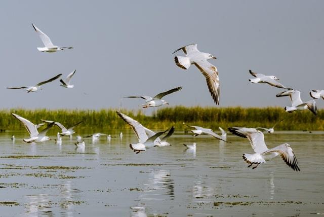 भगवान महावीर वन्य जीव अभ्यारण खुलने का समय – Bhagwan Mahavir Wildlife Sanctuary Opening Time In Hindi