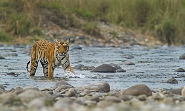 भगवान महावीर वाइल्डलाइफ सैंक्चुरी में क्या खास हैं – What's Special At Bhagwan Mahavir Wildlife Sanctuary In Hindi