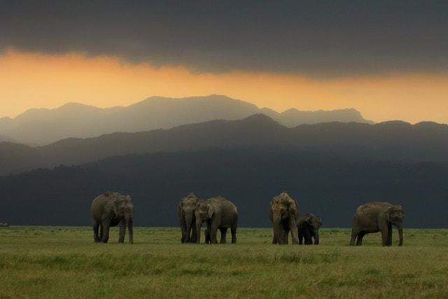 Jim Corbett National Park image