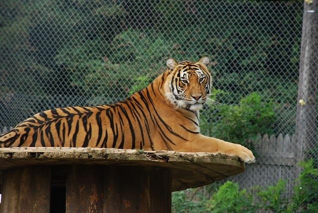 लखनऊ में पर्यटन स्थल लखनऊ चिड़ियाघर - Lucknow Me Paryatan Sthal Zoo In Hindi