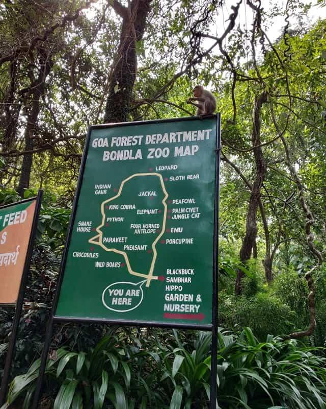बोंडला वन्यजीव अभ्यारण में वनस्पति - Flora At Bondla Wildlife Sanctuary In Hindi