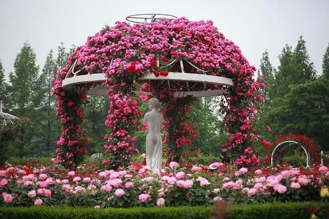 चंडीगढ़ के आसपास घूमने की जगह रोज गार्डन - Chandigarh Me Ghumne Ki Jagha Rose Garden In Hindi