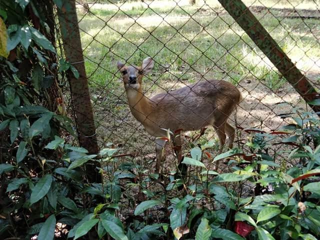 हिरन सफारी पार्क - Deer Safari Park