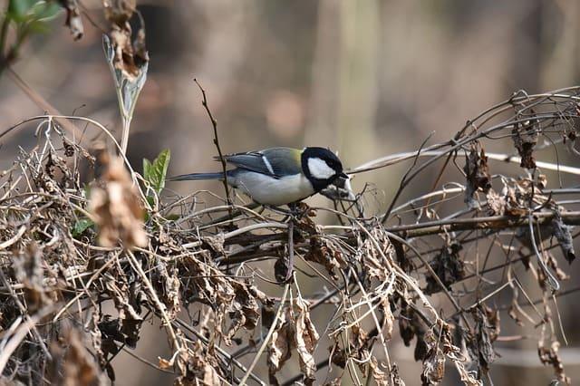 पक्षी - Birds