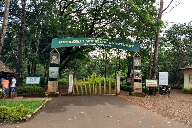 नेत्रावली वन्यजीव अभयारण्य घूमने की जानकारी - Netravali Wildlife Sanctuary Information In Hindi