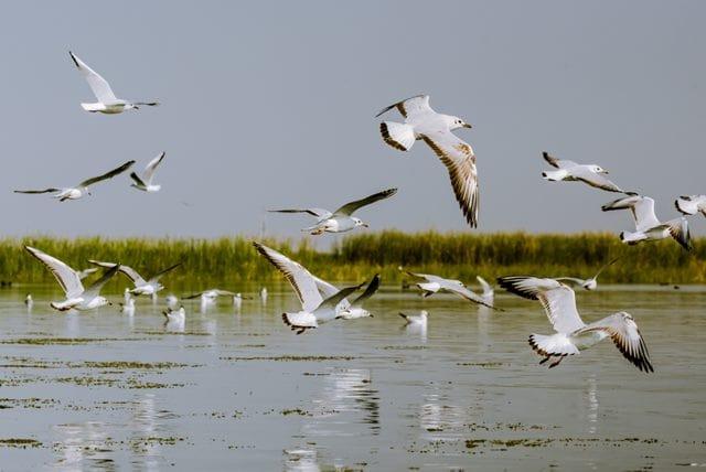 सुल्तानपुर पक्षी अभयारण्य - Sultanpur Bird Sanctuary In Hindi