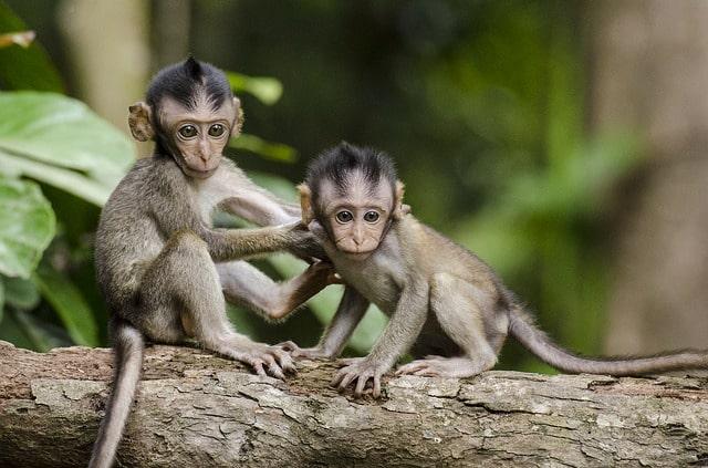 बोंडला वन्यजीव अभ्यारण में जीव-जंतु - Fauna At Bondla Wildlife Sanctuary In Hindi