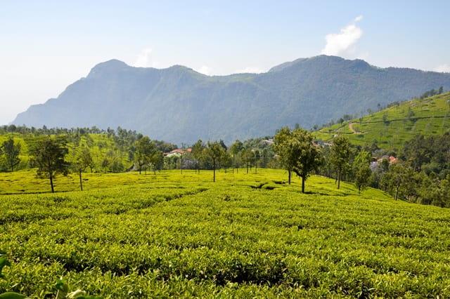 दक्षिण भारत में शॉर्ट ट्रिप के लिए कुन्नूर तमिल नाडू – South India Me Short Trip Ke Liye Coonoor Tamil Nadu In Hindi