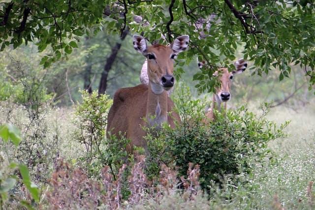 भरतपुर में घूमने की जगह केवलादेव नेशनल पार्क - Bharatpur Mein Ghumne Ki Jagha Keoladeo National Park In Hindi