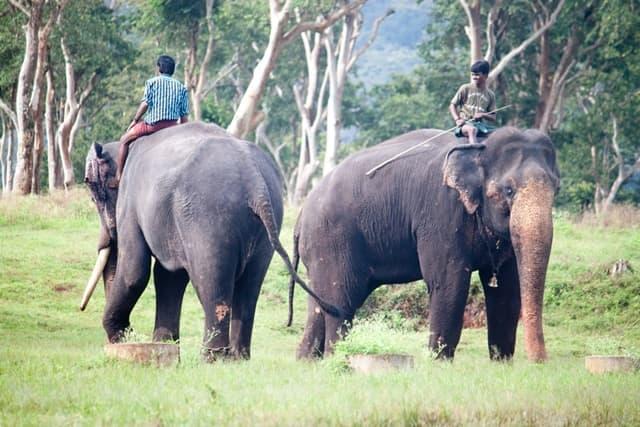 मैसूर फेमस पर्यटन स्थल बांदीपुर राष्ट्रीय उद्यान - Mysore Ki Famous Paryatan Sthal Bandipur National Park In Hindi