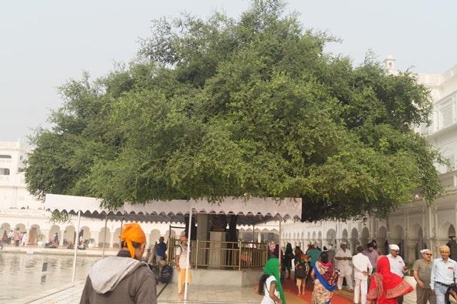 अमृतसर में देखने लायक जगह दुख भंजनी बेर वृक्ष - Amritsar Mein Dekhne Layak Jagah Dukh Bhanjani Ber Tree In Hindi http://www.worldcreativities.com