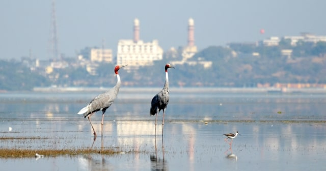 भोपाल में घूमने की जगह लोअर झील - Bhopal Me Ghumne Ki Jagah Lower Lake In Hindi