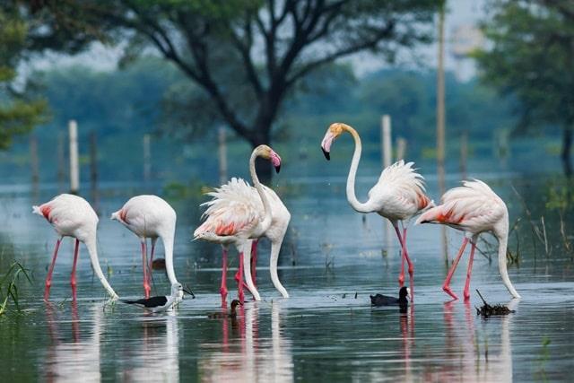 राजस्थान में प्रकृति का स्वर्ग है भरतपुर – Bharatpur Is Nature's Paradise In Rajasthan In Hindi