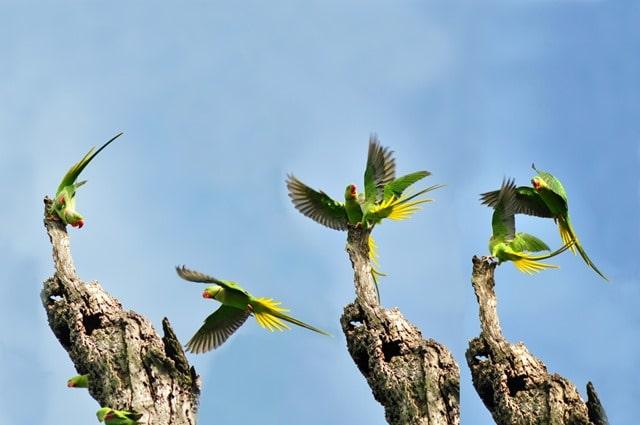 अमृतसर में घूमने वाली जगह हरिके वेटलैंड और पक्षी अभयारण्य - Amritsar Me Ghume Wali Jagah Harike Wetland And Bird Sanctuary In Hindi http://www.worldcreativities.com
