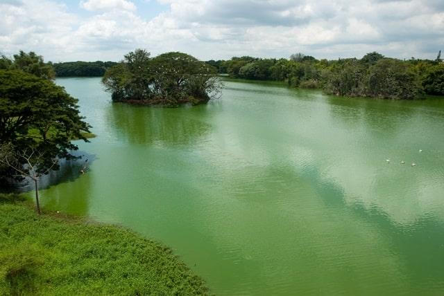मैसूर पर्यटन स्थल करणजी झील - Mysore Darshaniya Sthal Karanji Lake Mysore In Hindi
