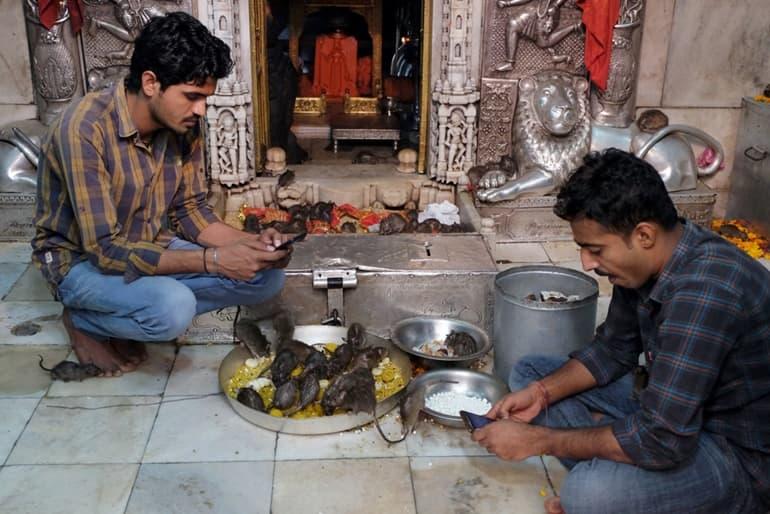 करणी माता मंदिर के दर्शन करने का समय