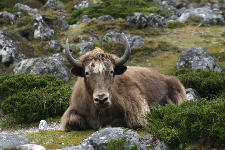 पिन वैली नेशनल पार्क की वनस्पति और जीव
