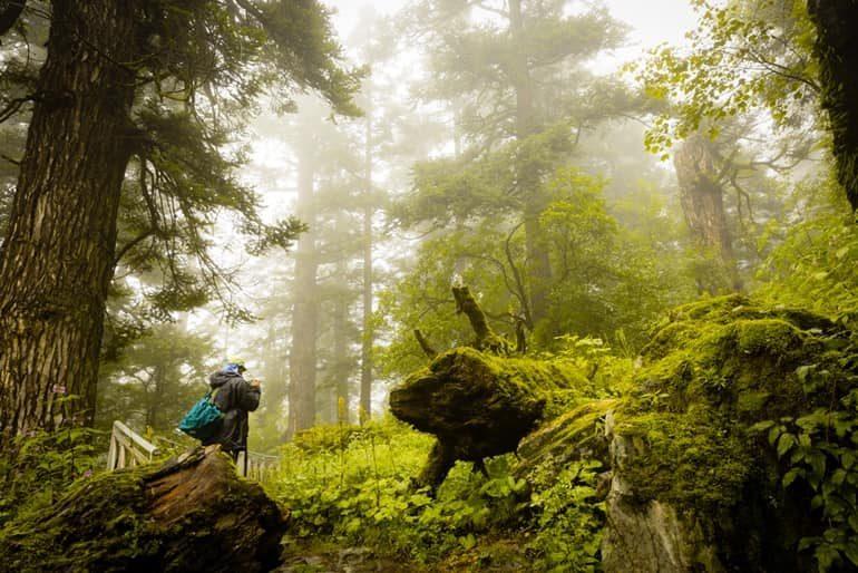 नंदा देवी राष्ट्रीय उद्यान घूमने की जानकारी - Nanda Devi National Park In Hindi