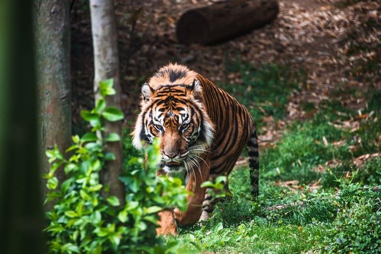 सुन्दरवन नेशनल पार्क के जानवर