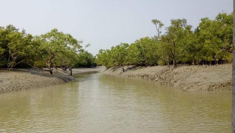 सुंदरवन नेशनल पार्क की वनस्पति