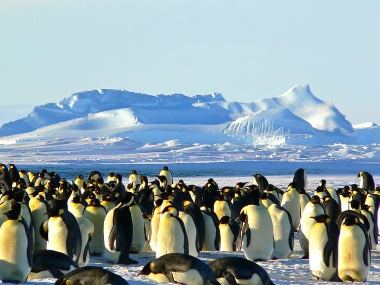 अंटार्कटिका का प्रसिद्ध आकर्षण स्थल अंटार्कटिक प्रायद्वीप