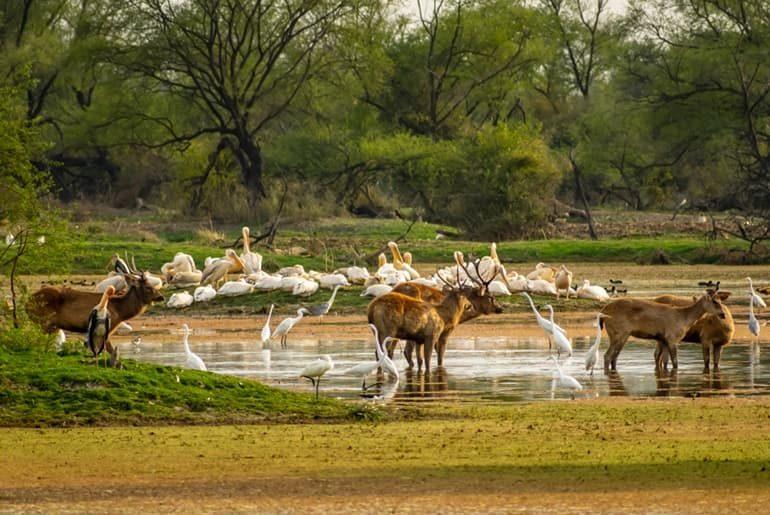 माउंट आबू वनजीव अभ्यारण की जानकारी - Mount Abu Wildlife Sanctuary In Hindi