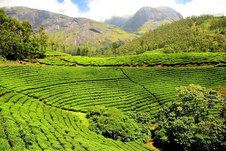 कैंडी में घूमने लायक जगह गिरगामा चाय बागान