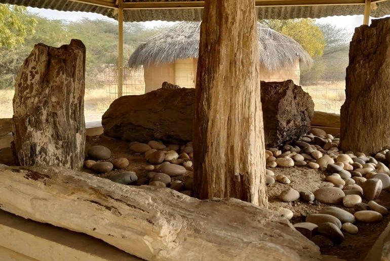 अकाल वुड फॉसिल पार्क घूमने की जानकारी - Akal Wood Fossil Park In Hindi