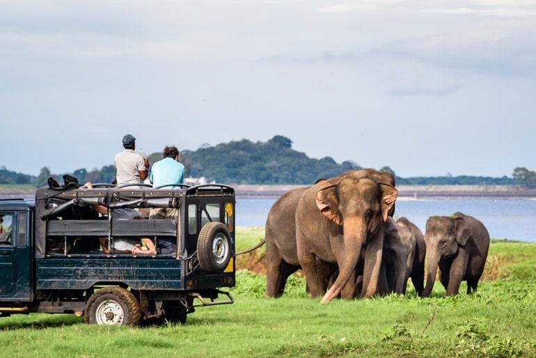 कैंडी टूरिज्म में देखने लायक खुबसूरत जगह पिनावाला हाथी अनाथालय