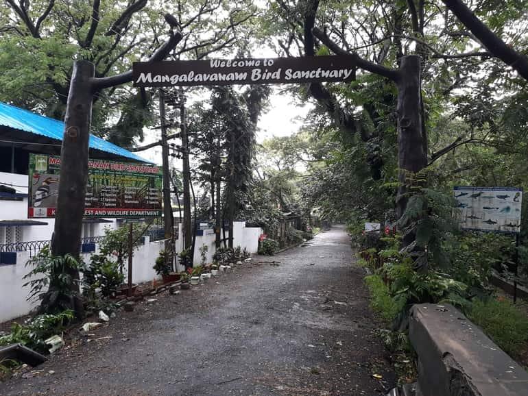 कोच्चि में बच्चो के साथ घूमने वाली जगह मंगलवनम पक्षी अभयारण्य - Mangalavanam Bird Sanctuary Best Place To Visit With Children In Kochi In Hindi