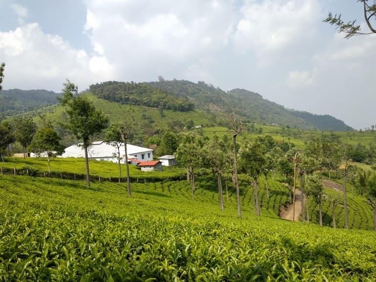 कुन्नूर टूरिज्म में घूमने लायक जगह हाईफील्ड टी एस्टेट - Coonoor Tourism Me Ghumne Layak Jagah Highfield Tea Estate In Hindi