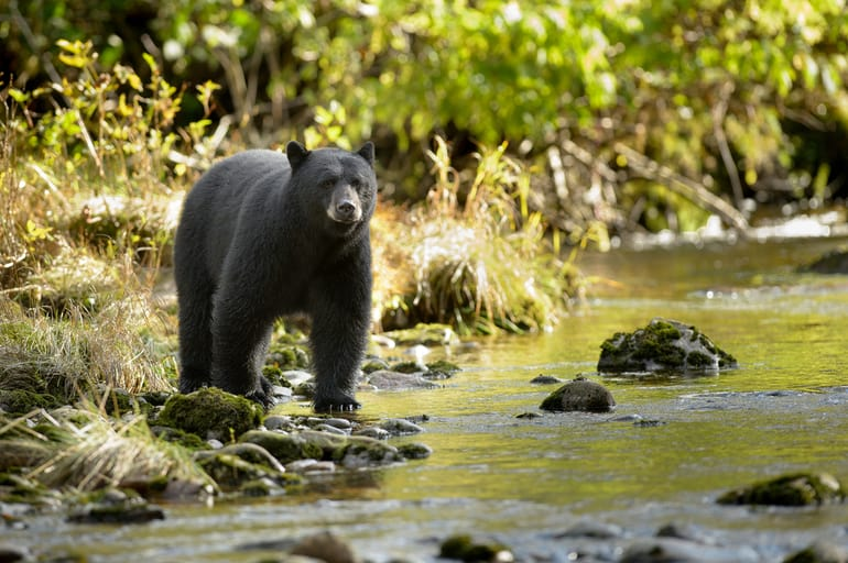 डिब्रूगढ़ के दर्शनीय स्थल देहिंग पटकाई वन्यजीव अभयारण्य - Dibrugarh Ke Darshaniya Sthal Dehing Patkai Wildlife Sanctuary In Hindi