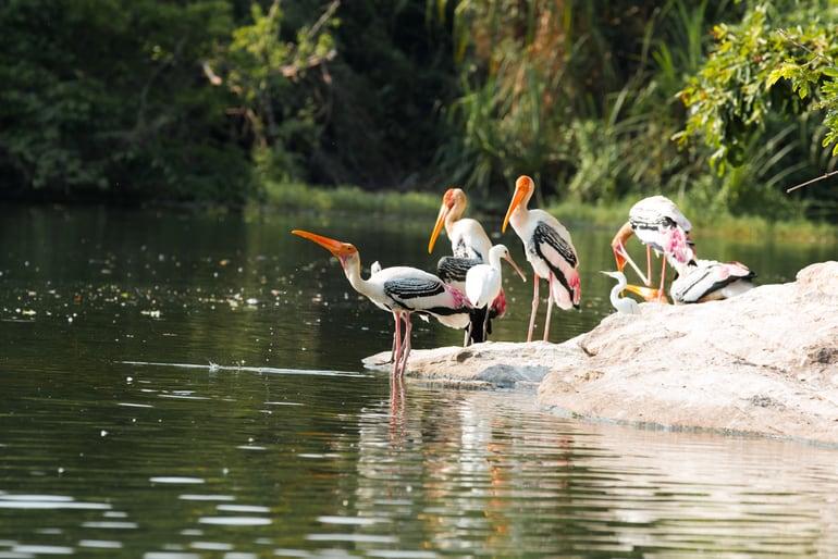 डिब्रूगढ़ के बेस्ट टूरिस्ट प्लेस डिब्रू सैखोवा राष्ट्रीय उद्यान - Dibru-Saikhowa National Park Dibrugarh Tourist Place In Hindi