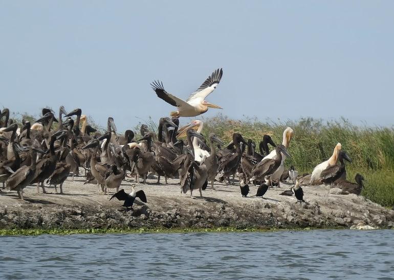 अल्लेप्पी में घूमने लायक अच्छी जगह कुमारकोम पक्षी अभयारण्य - Alleppey Me Ghumne Layak Achi Jagah Kumarakom Bird Sanctuary In Hindi