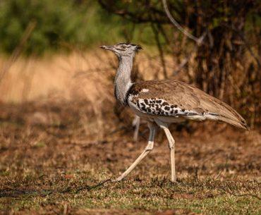 शेरगढ़ वन्यजीव अभयारण्य बारां के घूमने की जानकारी - Shergarh Wildlife Sanctuary In Hindi